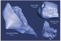 Study on Meteorites using the GeMSE spectrometer